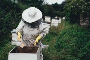 apiary, bee, bee farm